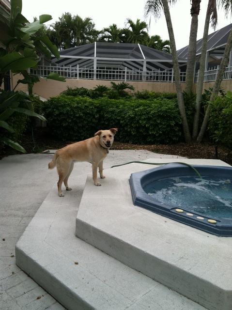Dixie The Dog